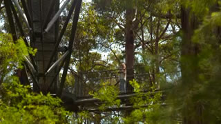 Treetop Walk and Frankland Sum