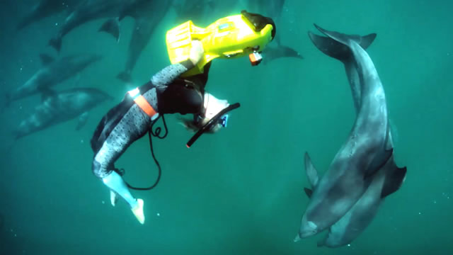 Experience Dolphins