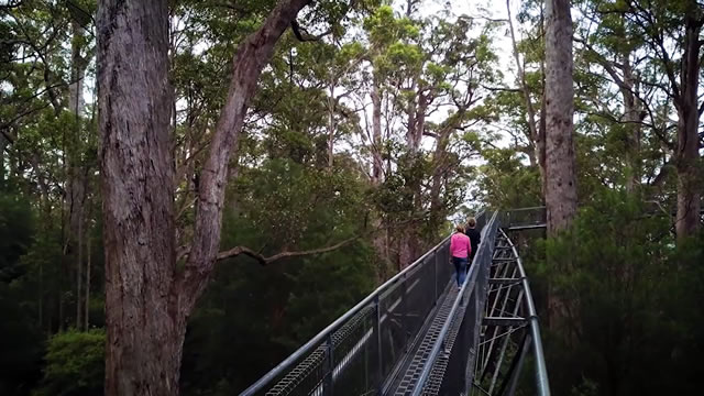 Valley of the Giants Treetop W